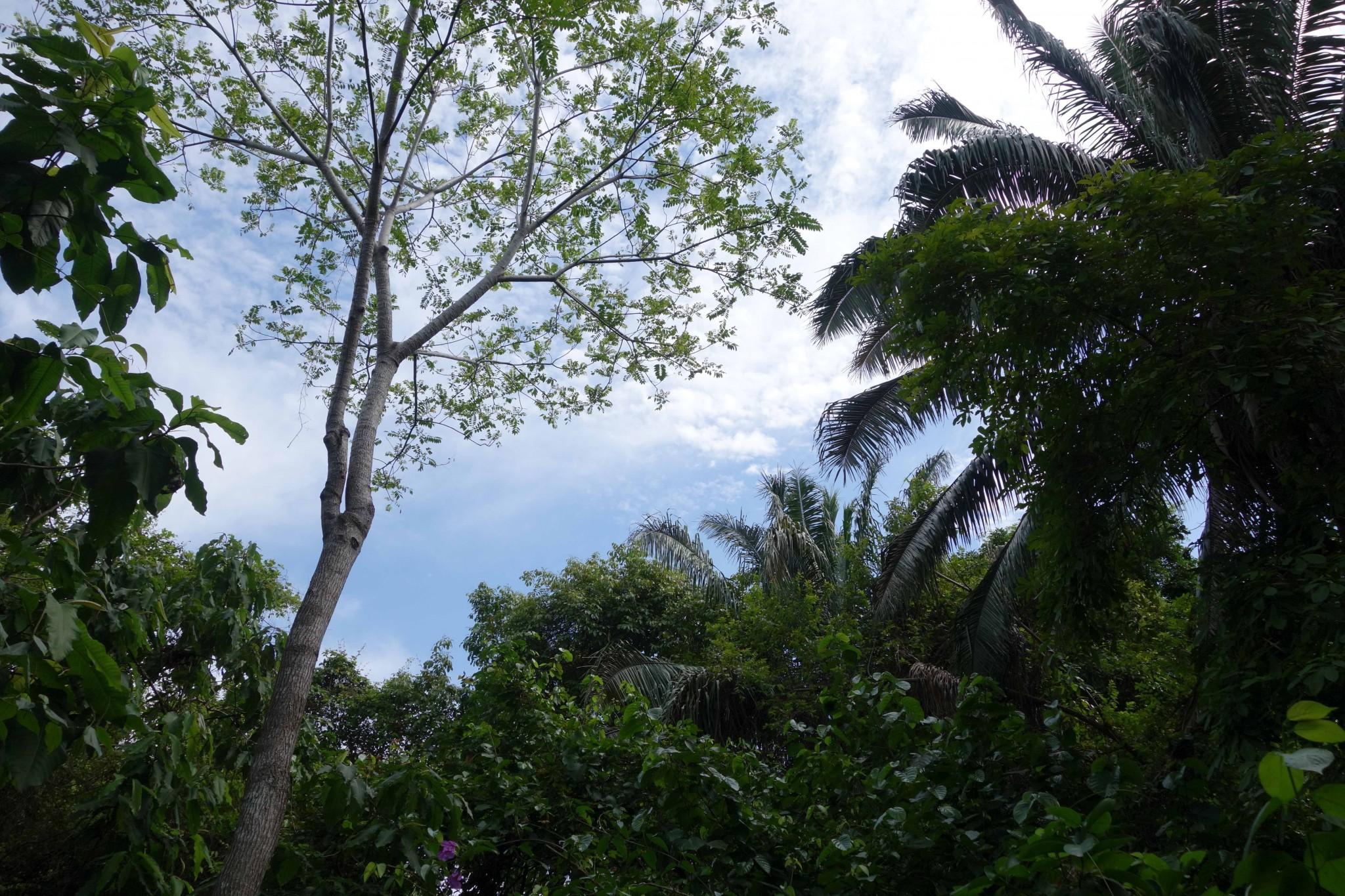 Parque Tayrona tropischer Regenwald