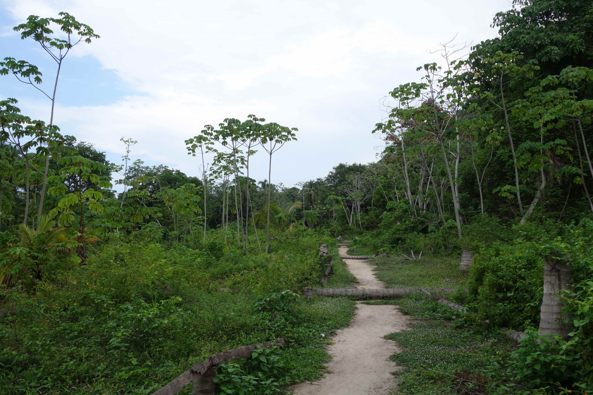 Parque Tayrona Weg durch den tropischen Regenwald