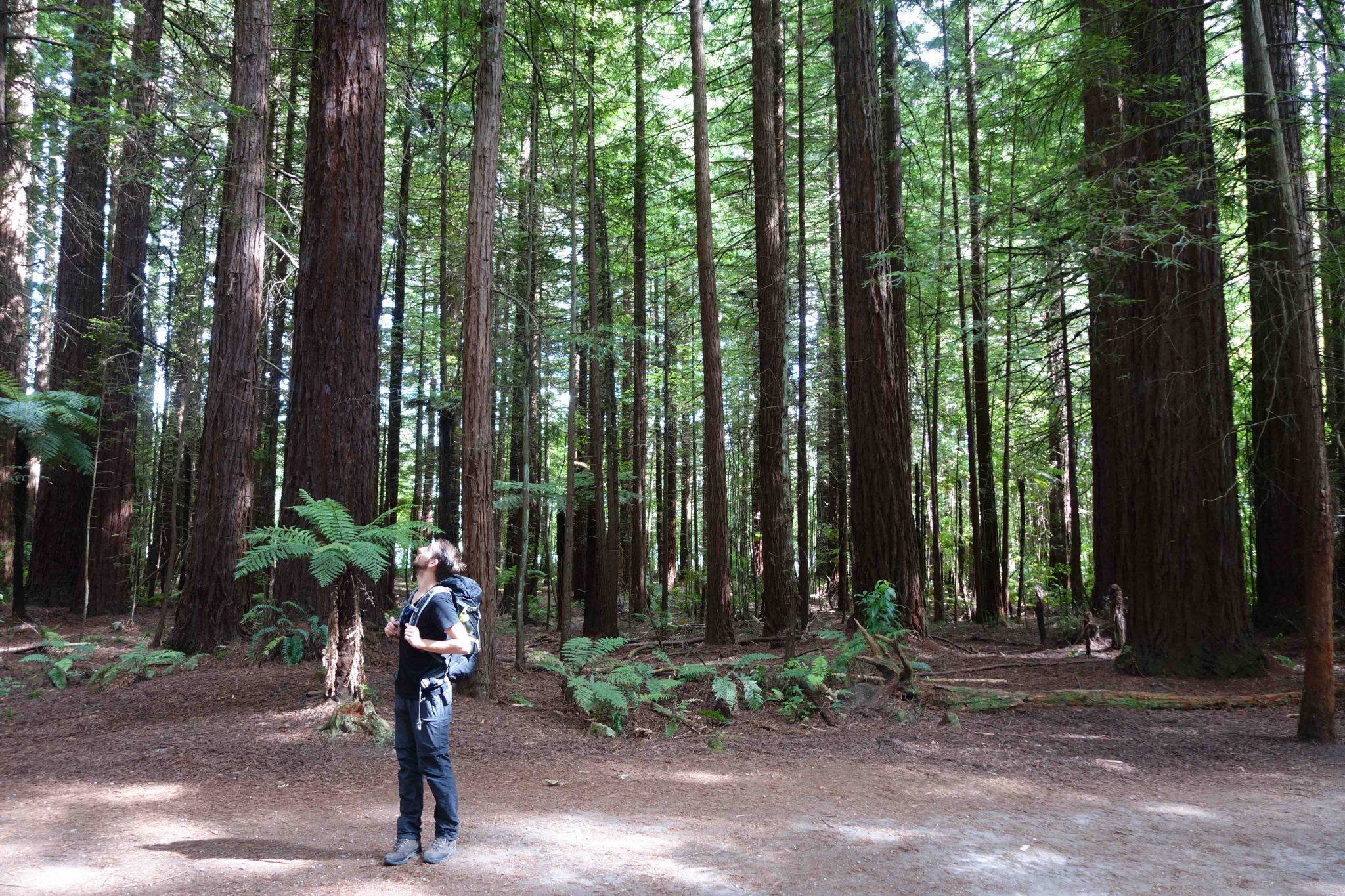Rotorua_WhakarewarewaForest_3