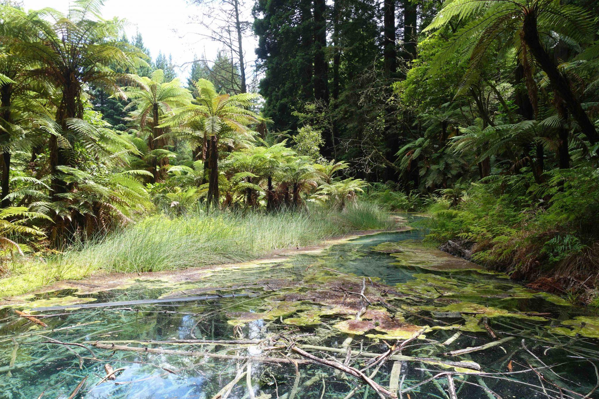 Rotorua_WhakarewarewaForest_5