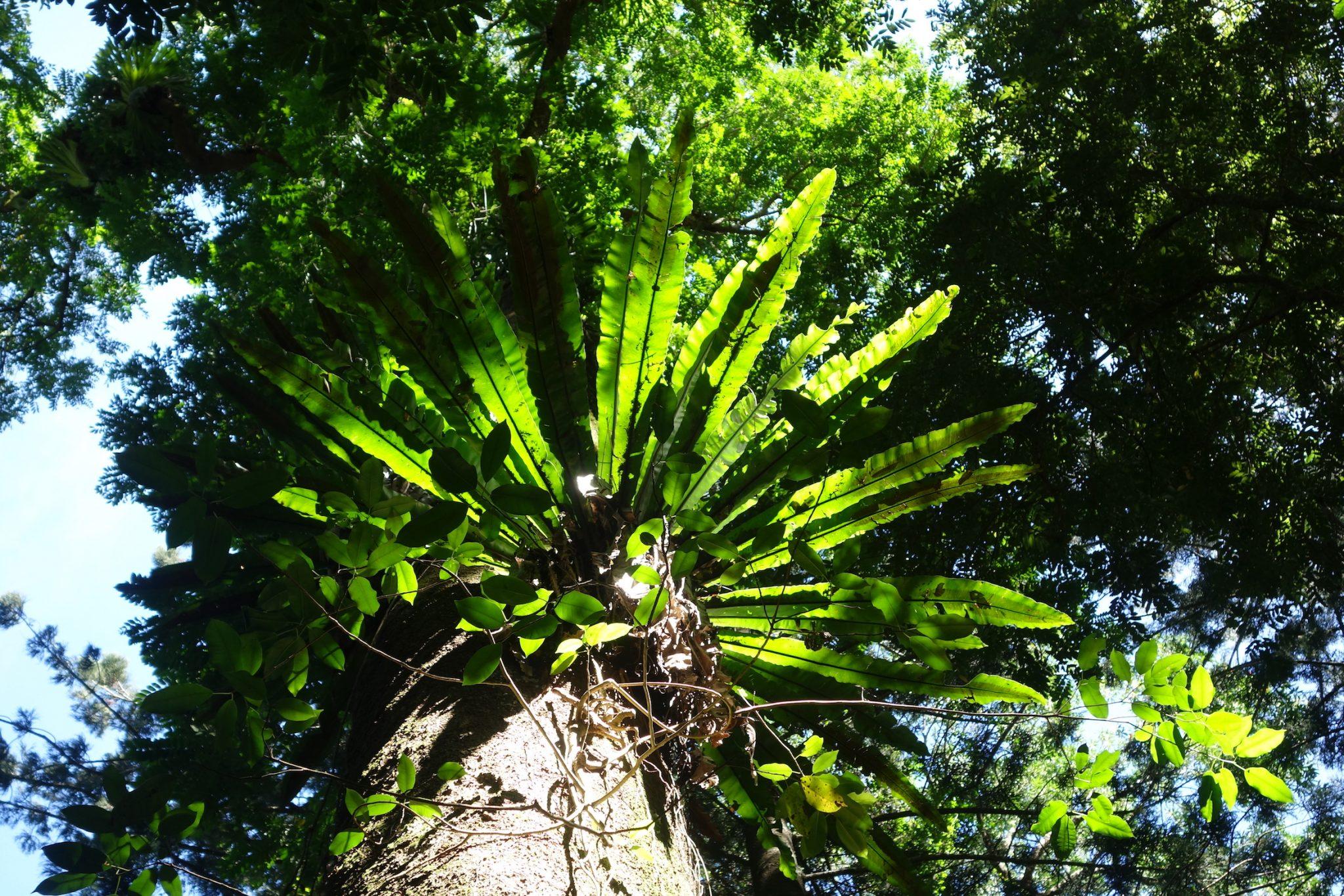 Australien_Ostkueste_SpringbrookNationalPark_6_Forest