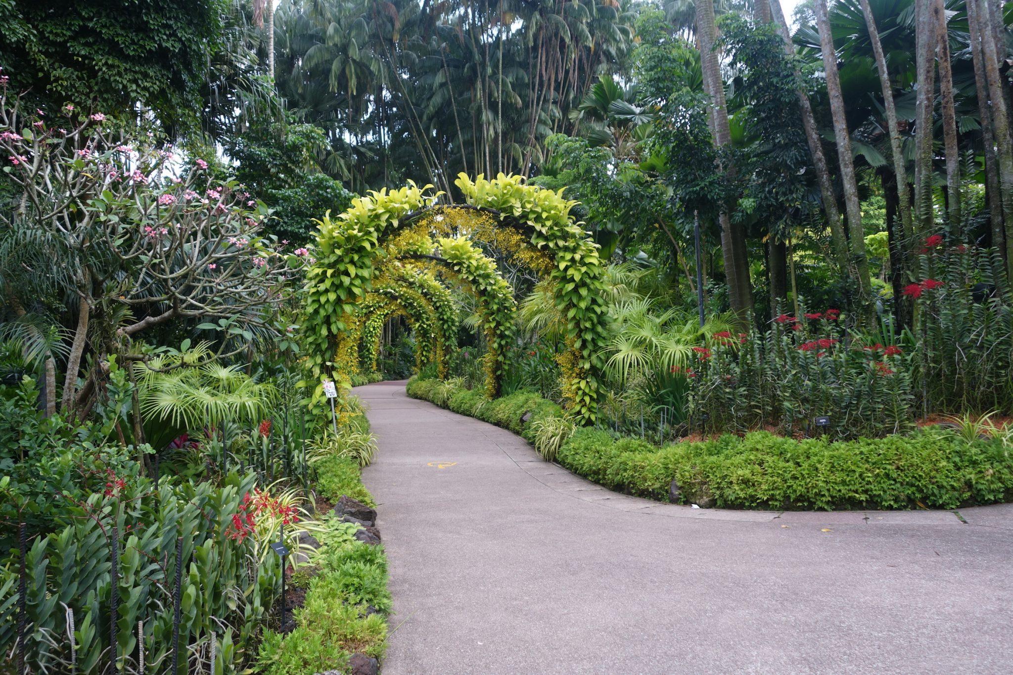 Singapur_BotanicGardens_11