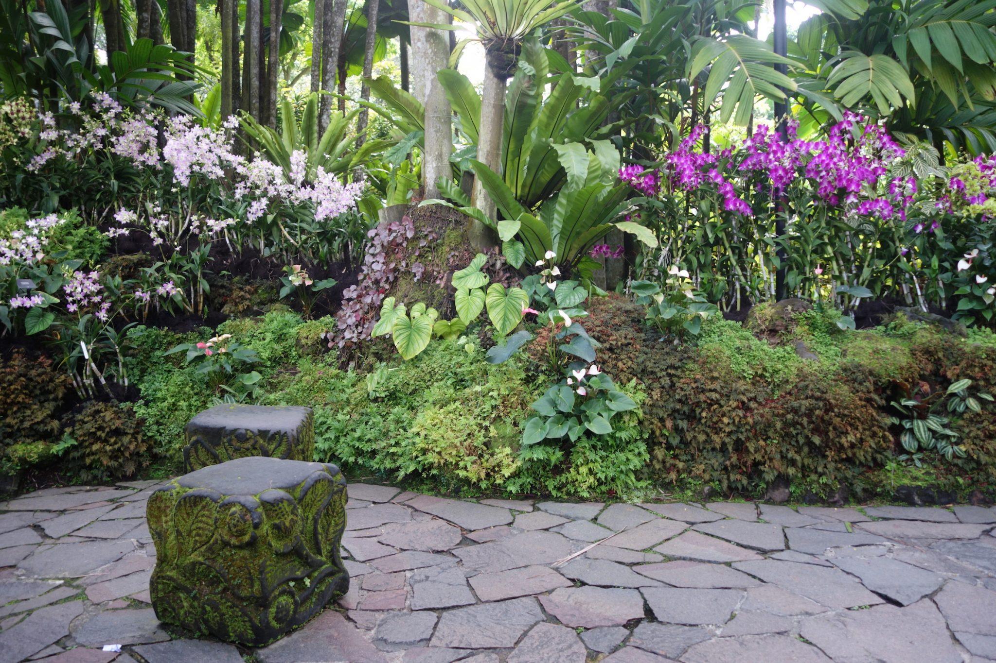 Singapur_BotanicGardens_12