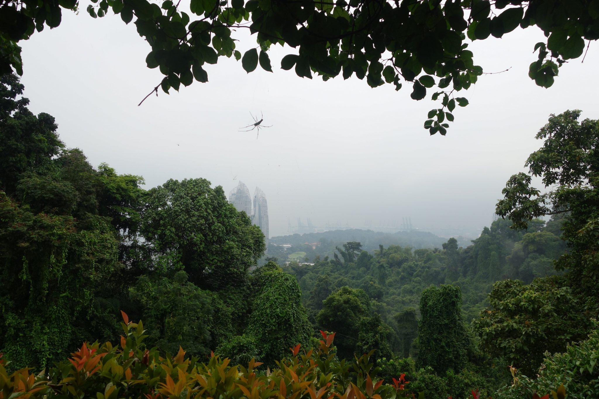 Singapur_SouthernRidges_8