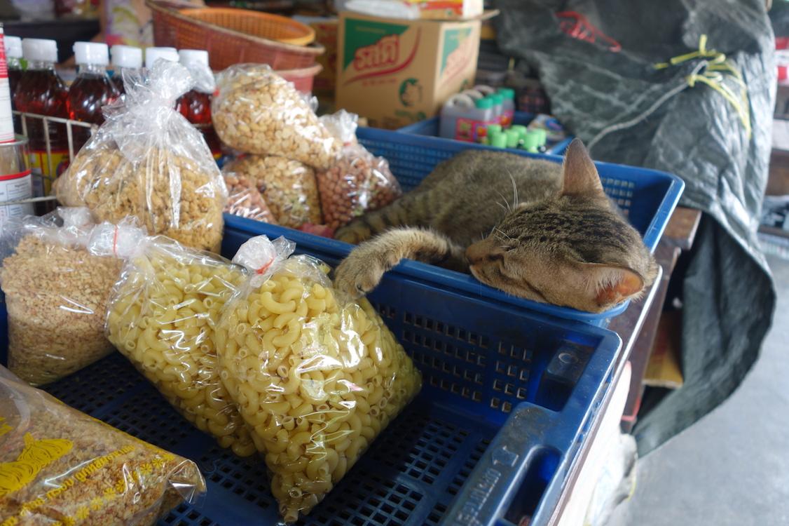 Bangkok_Stop14_Markt_6_Katze